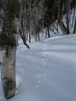 150207雪遊びm東  (47).jpg