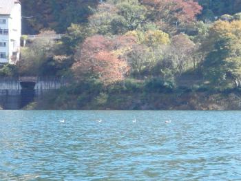 151029半日カヌー1sa (9).jpg