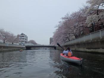 160402お花見カヌーH (67).jpg