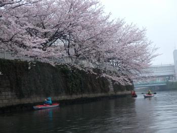 160403お花見カヌーH (56).jpg