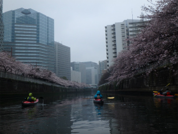 160403お花見カヌーH (66).jpg
