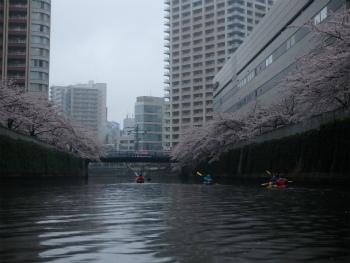 160403お花見カヌーH (73).jpg