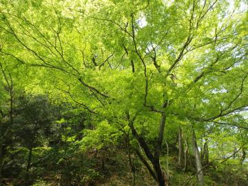 160502半日カヌー1sa (47).jpg