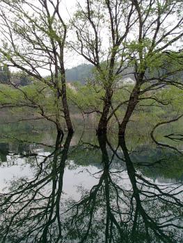 160502早朝カヌーbf (5).jpg