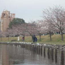 3月30日 スカイツリーお花見カヌーツアー HIDEのイメージ
