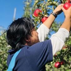 アップルオーナーの収穫のイメージ