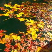 11月14日 四万湖カヌーツアー ちひろのイメージ