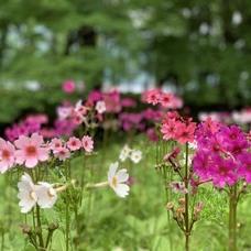 6月20日 中禅寺湖カヌーツアーのイメージ